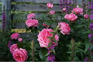 Ля Роуз де Молинар (La Rose de Molinard)