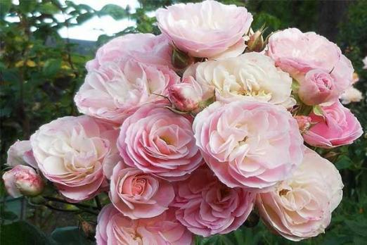 Букет Парфэ (Bouquet Parfait)